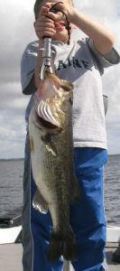 Orlando Bass Fishing, Kissimmee Bass Fishing, Lake Toho Bass Fishing