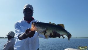 Largemouth Bass 8.4 Pounds Caught On Toho